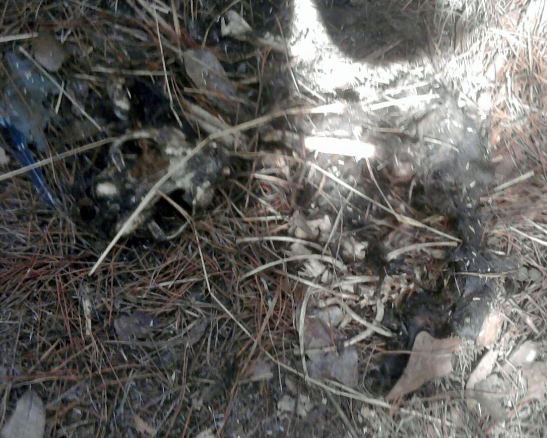 Photographs - Unsanitary Conditions   Caboodle Ranch Animal Cruelty Investigations