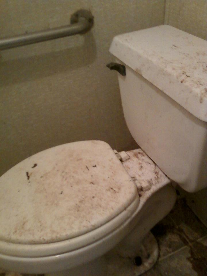 Cats living in filthy  non working bathroom  Sep 2010. Photographs   Unsanitary Conditions   Caboodle Ranch Animal